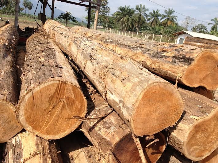 Wood Logs Export Bio Tech Energy