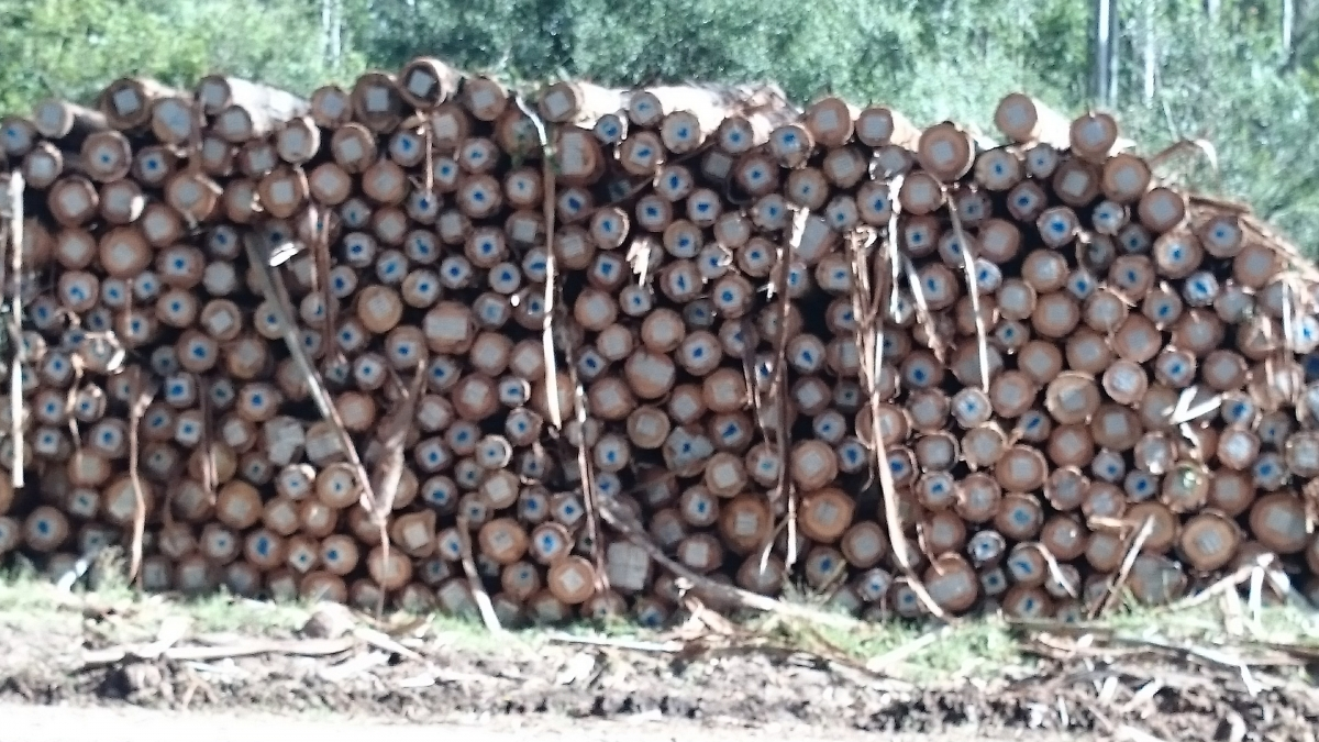 Wood Logs Export | WOOD CHIPS SUPPLY